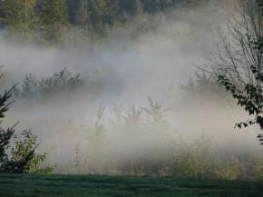 sw_morning_mist_in_trees