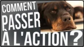 procrastination passer l'action action rêve projet apprendre réussir réussite succès procrastiner paresse anglais marathon chien